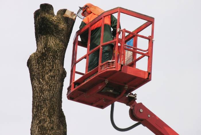 Tree Lopping Canberra ACT