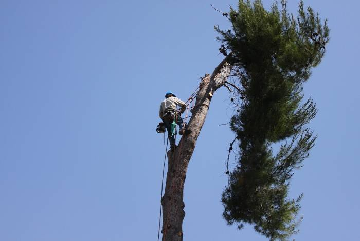 Tree Lopping Canberra