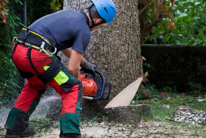 Tree Surgeon Canberra