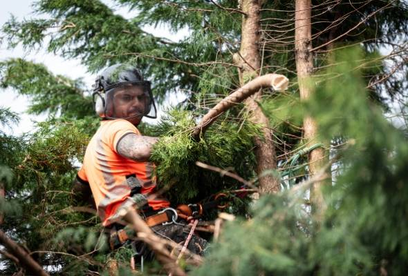 Tree Services Canberra