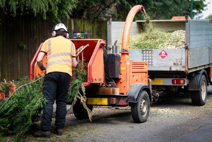 Tree removal Canberra